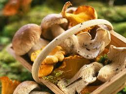 COMPLET – Cours de cuisine «Dîner à l'Atelier»: Vendredi 20 octobre de 18h à 22h (dîner inclus sur place) : Tout est bon dans le champignon! (49€)